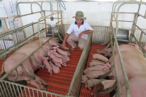 No Transmission of Hepatitis E Virus in Pigs Fed Diets Containing Commercial Spray-Dried Porcine Plasma